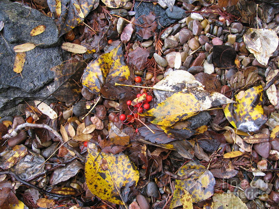 Rocks And Berries Photograph