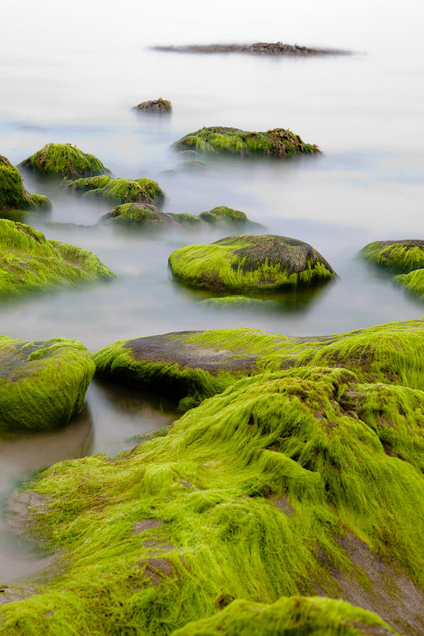 Rocks Or Boulders Covered With Green Seaweed Bading In Misty Sea  Photograph
