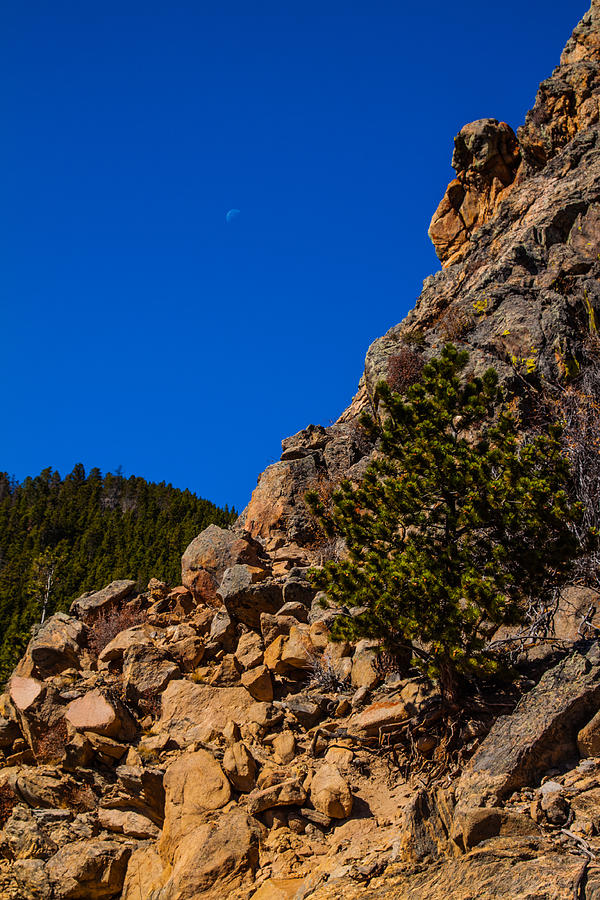 Rocky Ledge With Moon And Trees In Background And Foreground Photograph