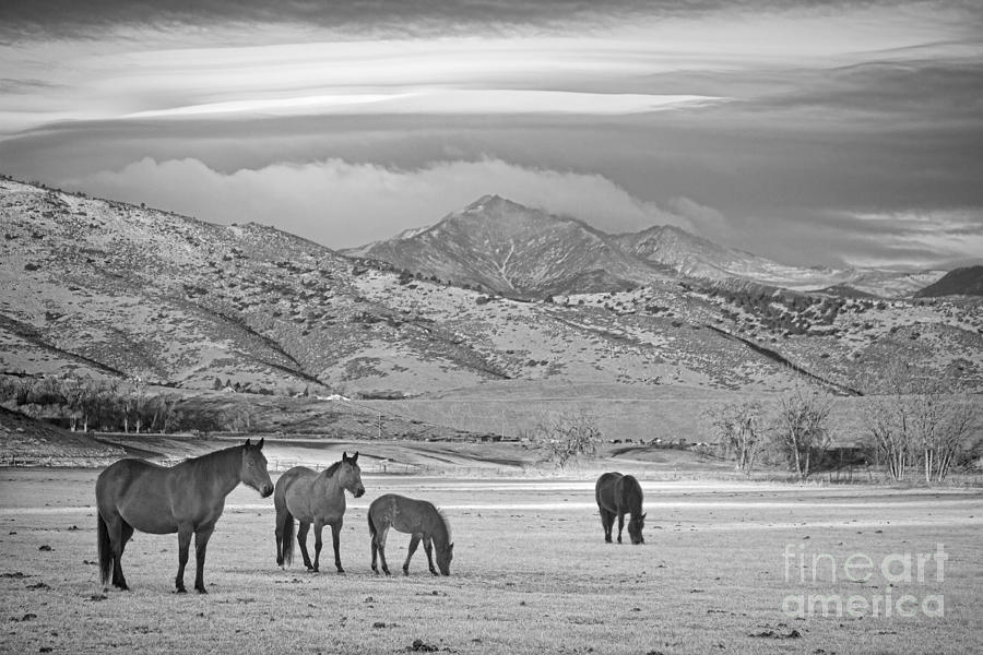 Horses Photograph - Rocky Mountain Country Morning Bw by James BO  Insogna