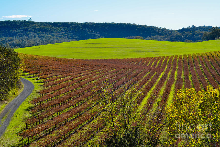Rolling Hills And Vineyards Photograph