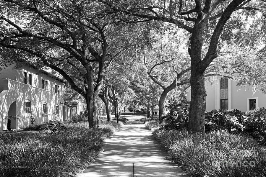 Rollins College Landscape Photograph