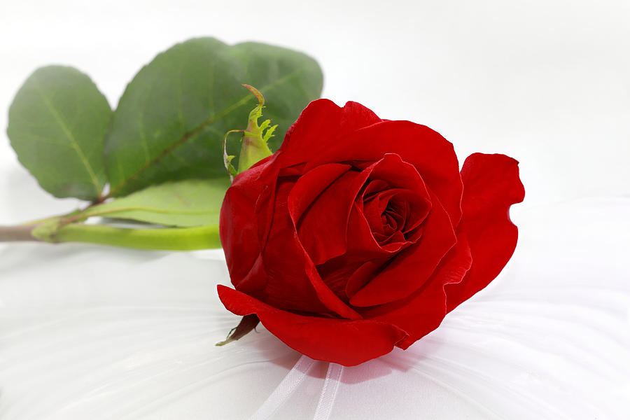 Romantic I Love You Red Rose Photograph by Tracie Kaska