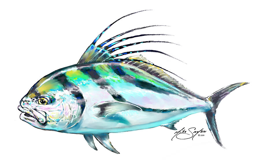 Rooster fish study painting by savlen art for Rooster fish pictures
