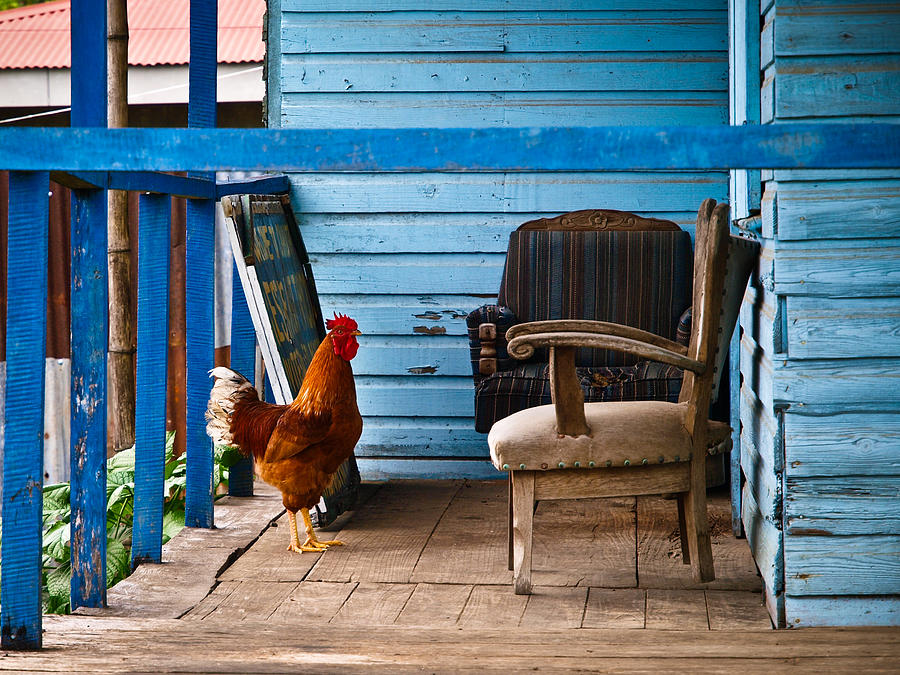 Rooster On Porch  Photograph  - Rooster On Porch  Fine Art Print