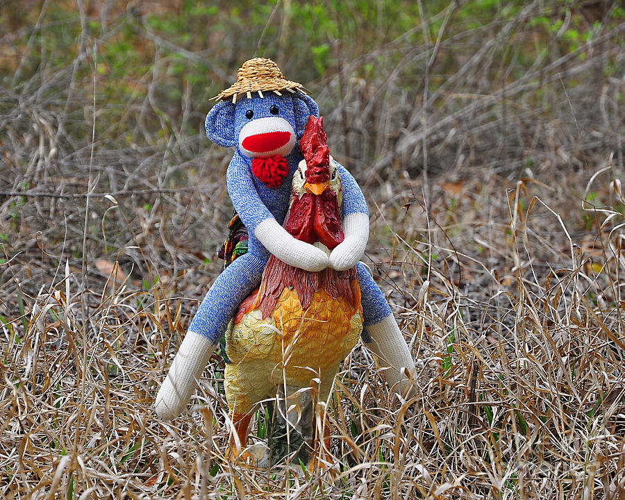 Monkey Photograph - Rooster Rider by Al Powell Photography USA