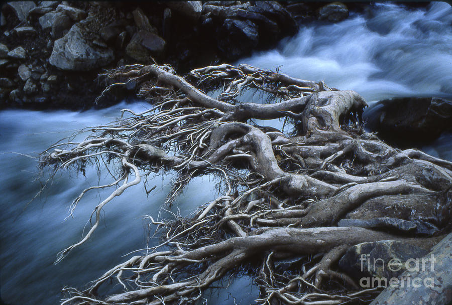 Roots Over Ozark Stream Photograph