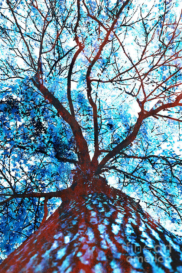 Roots To Branches II Photograph