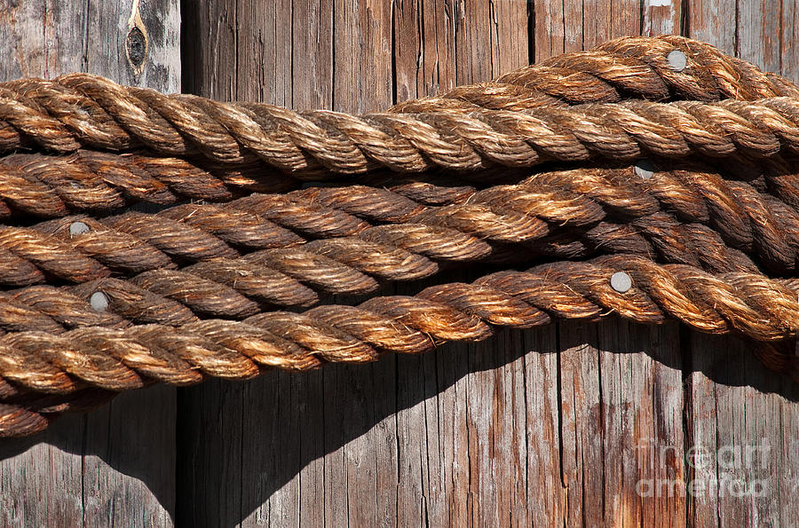 Rope Photograph - Roped by Dan Holm