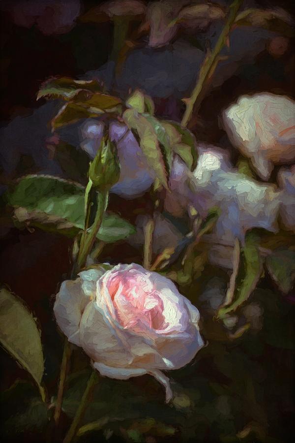Rose 122 Photograph
