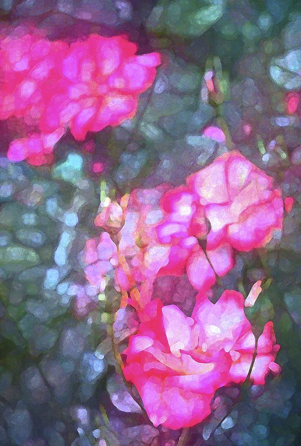 Floral Photograph - Rose 188 by Pamela Cooper