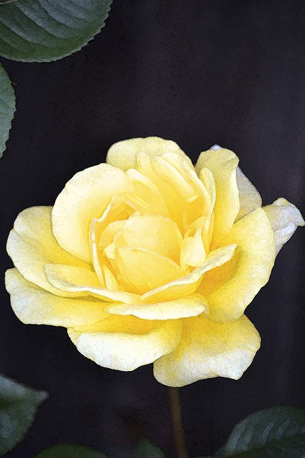 Floral Photograph - Rose 196 by Pamela Cooper