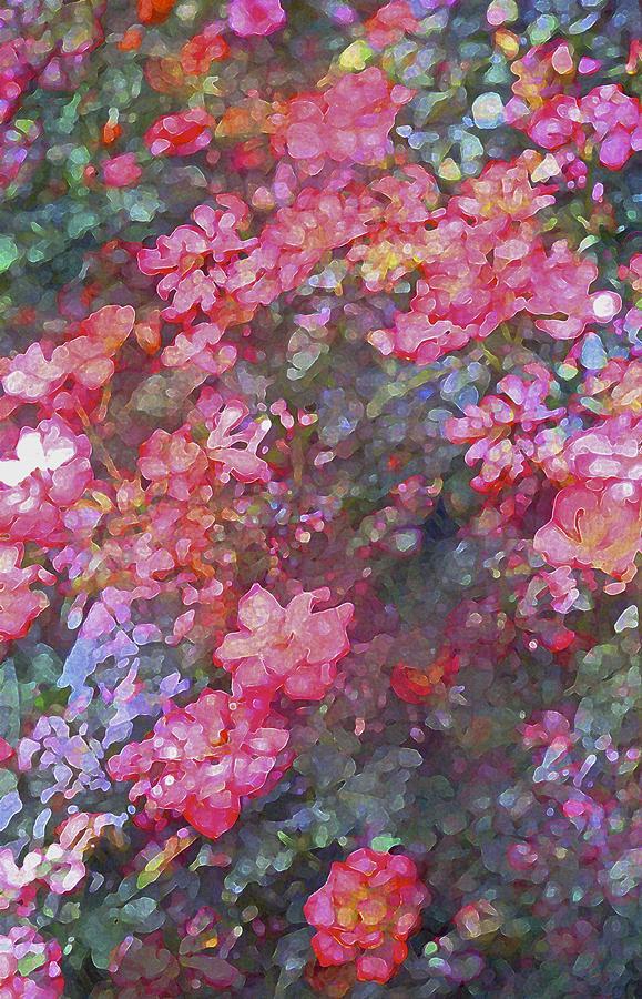 Floral Photograph - Rose 199 by Pamela Cooper