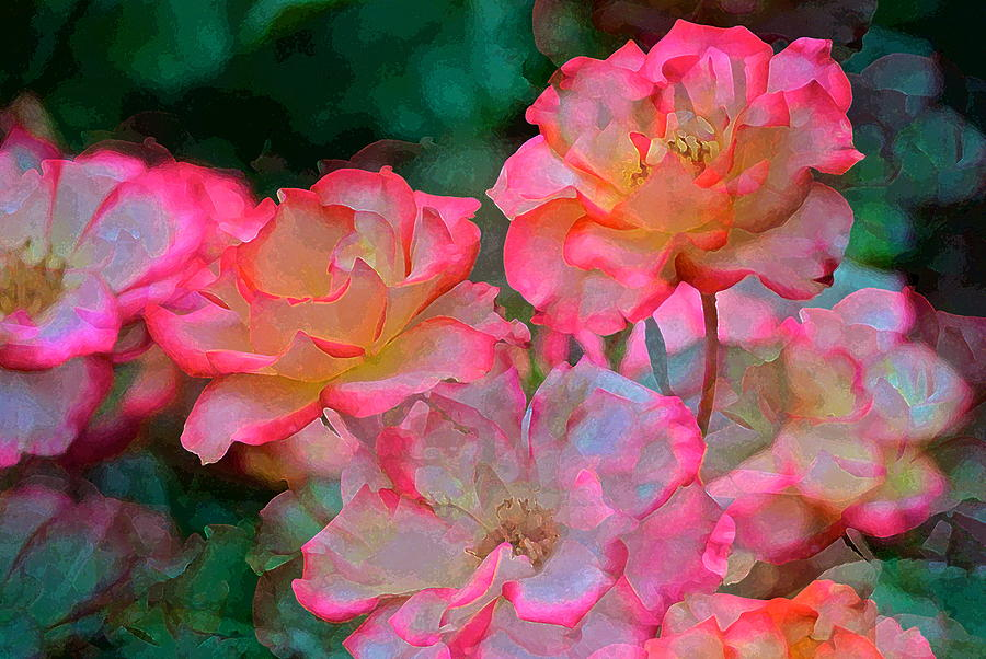 Rose 203 Photograph