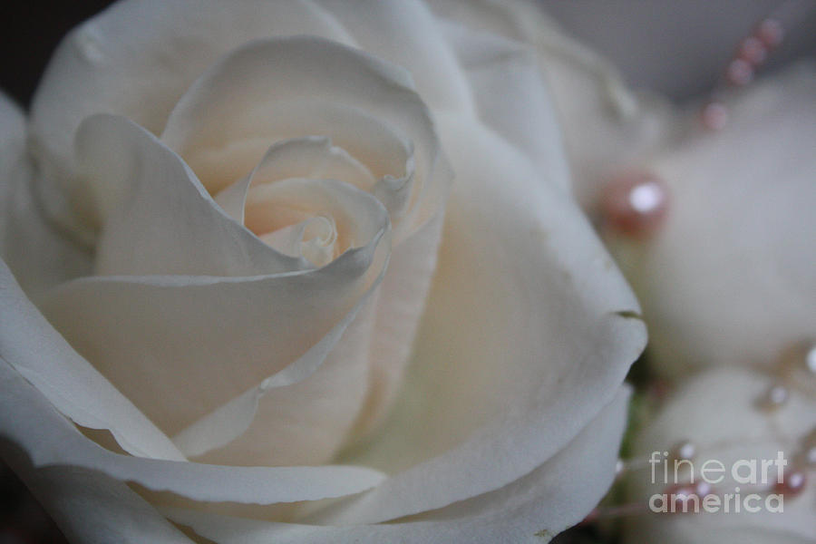Rose And Pearls Photograph