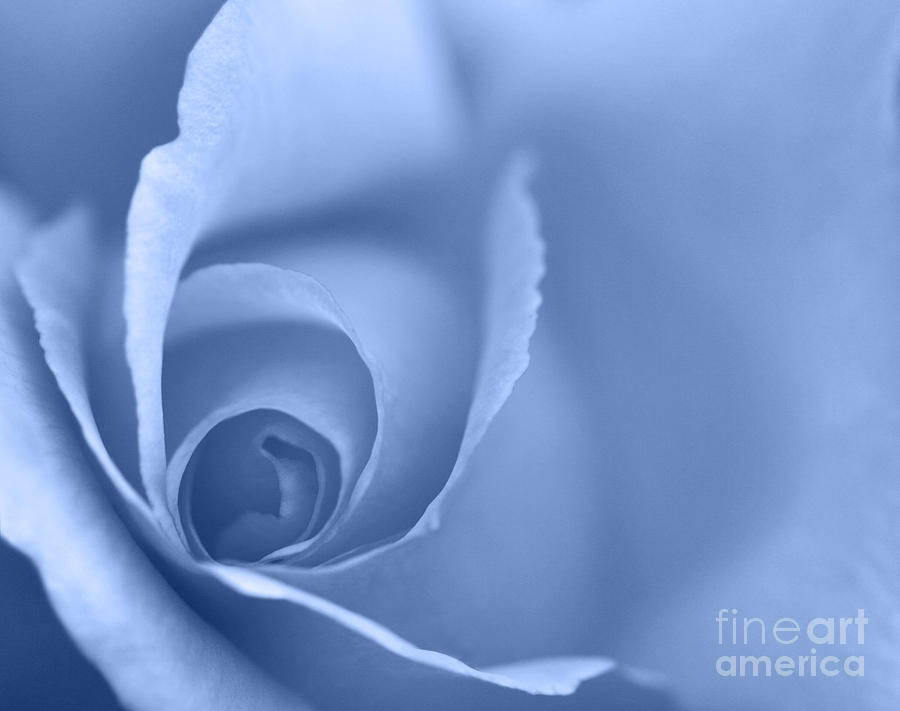 Rose Close Up - Blue Photograph  - Rose Close Up - Blue Fine Art Print