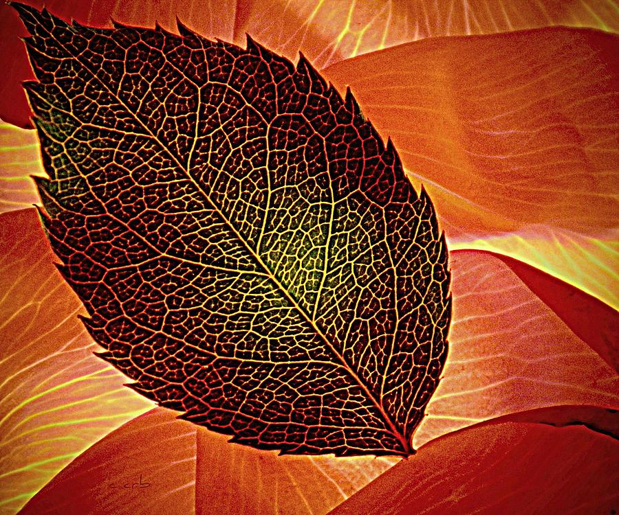 Rose Foliage On Rose Petals Photograph  - Rose Foliage On Rose Petals Fine Art Print