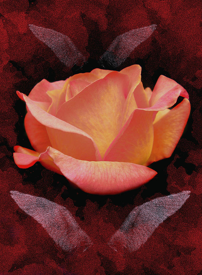 Rose From Angels Digital Art Painting  - Rose From Angels Digital Art Fine Art Print