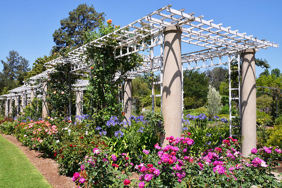 Rose Garden Trellis Photograph