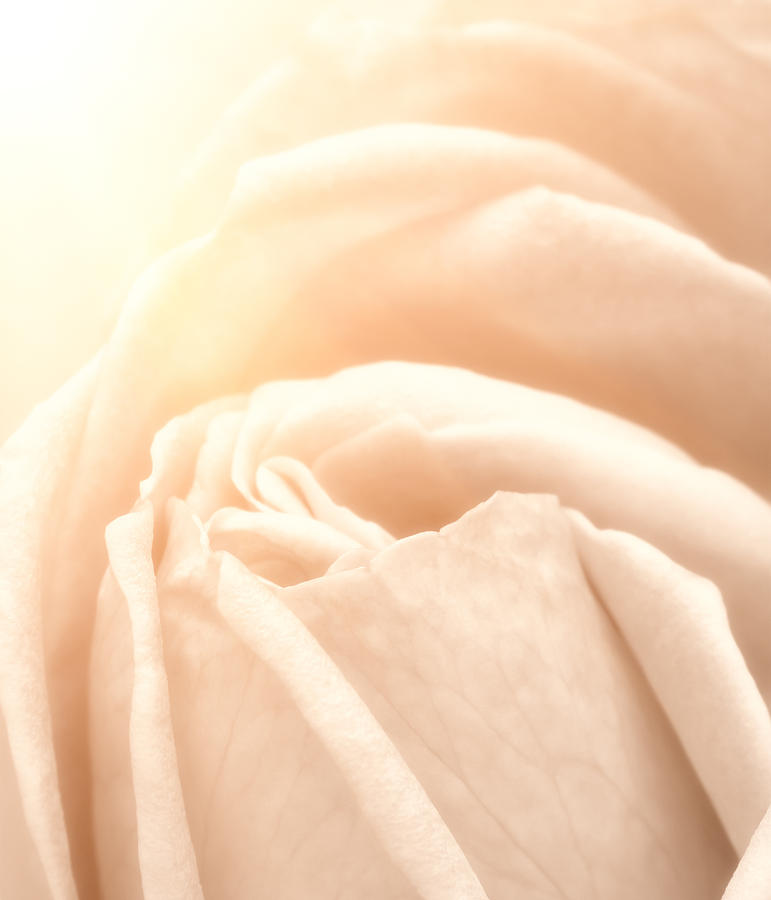 Softness Photograph