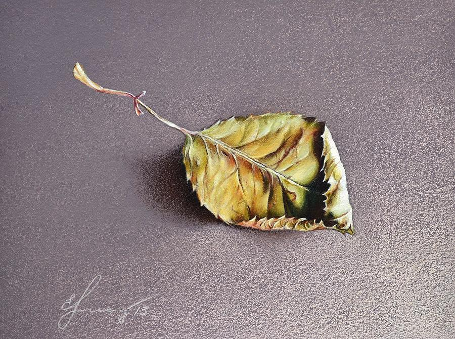 Still Life Drawing - Rose Leaf by Elena Kolotusha