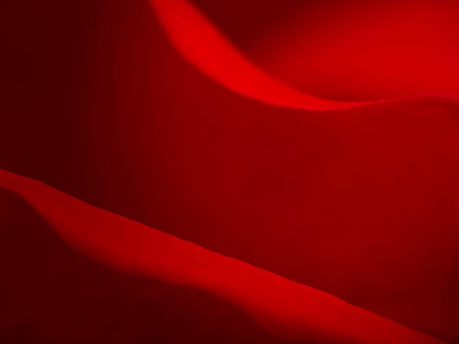 Rose Macro Photograph