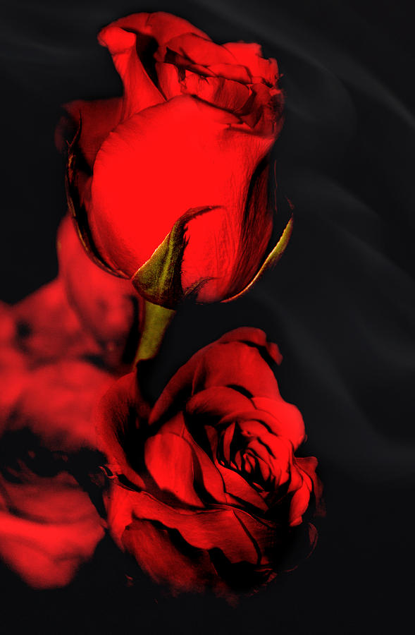 Roses Are Red Photograph  - Roses Are Red Fine Art Print
