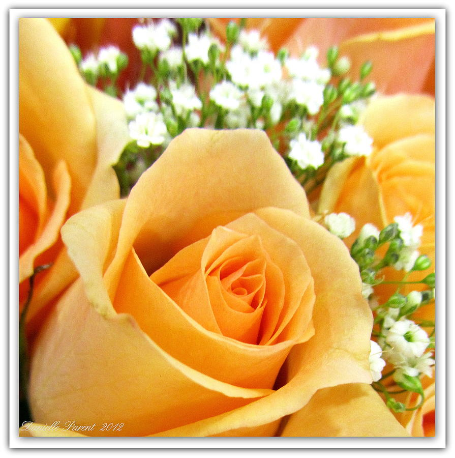 Botanical Art Metal Prints Photograph - Roses Orange Blossoms by Danielle  Parent