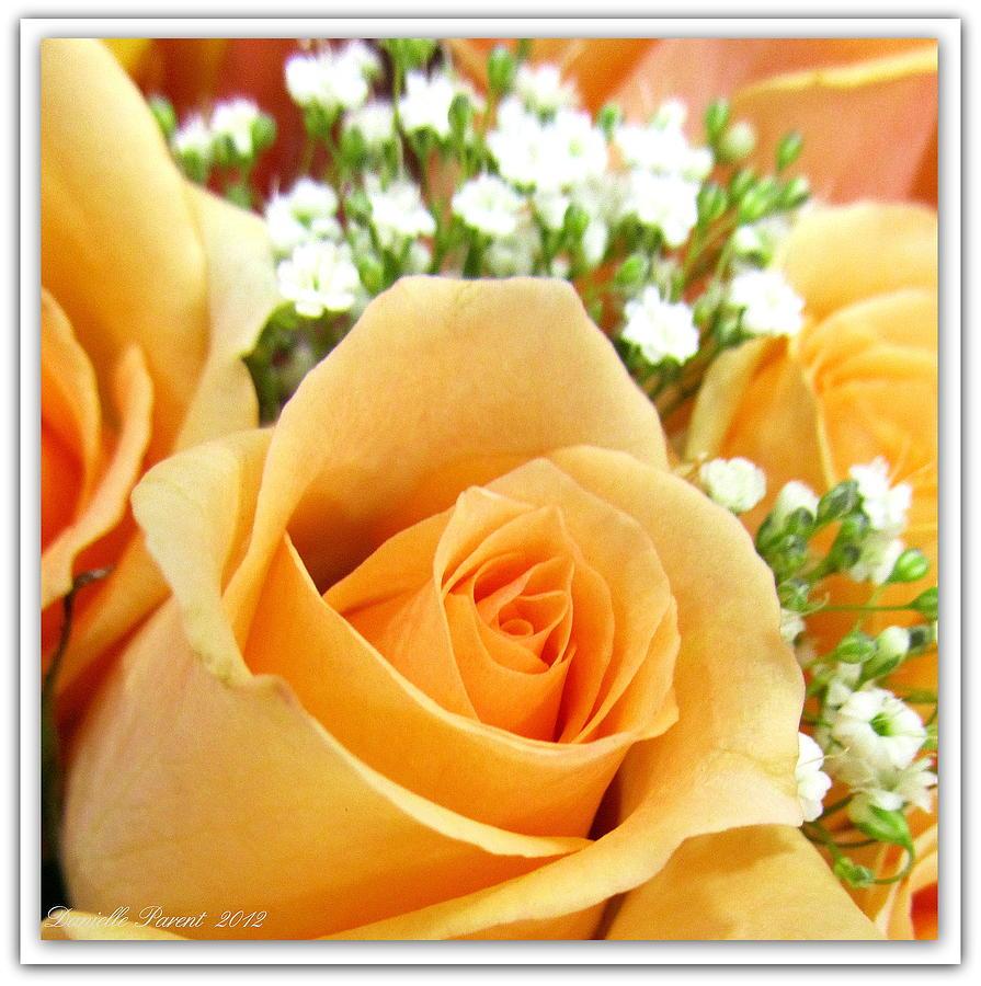 Roses Orange Blossoms Photograph