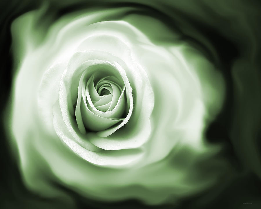 Roses Whispers Green Photograph