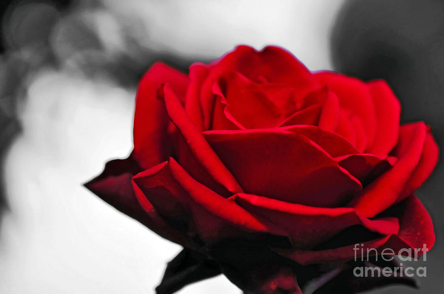 Rosey Red Photograph  - Rosey Red Fine Art Print