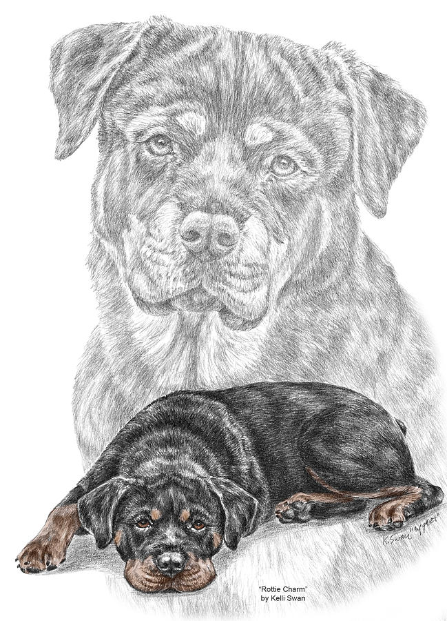 Rottie Charm Rottweiler Dog Print With Color Drawing By