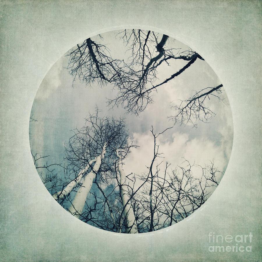 round treetops II Photograph