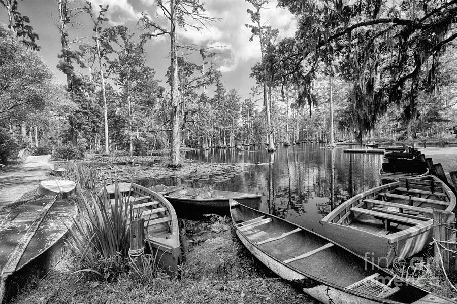 Row Boats In Cypress Tree Swamp IIi Photograph  - Row Boats In Cypress Tree Swamp IIi Fine Art Print