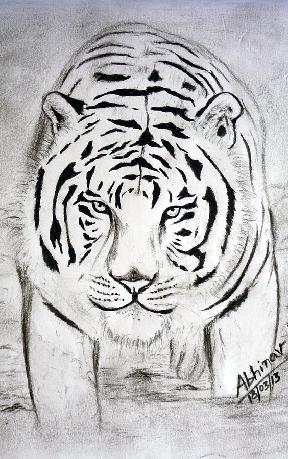 Royal Bengal Tiger Drawing  - Royal Bengal Tiger Fine Art Print
