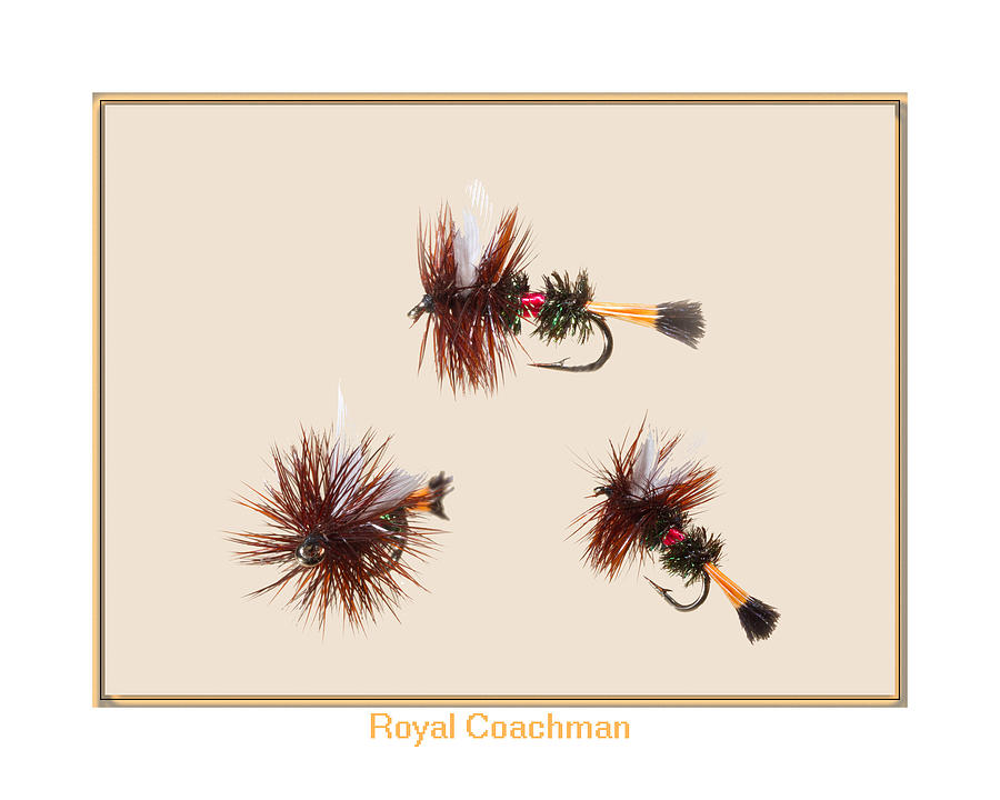 Royal Coachman II Photograph