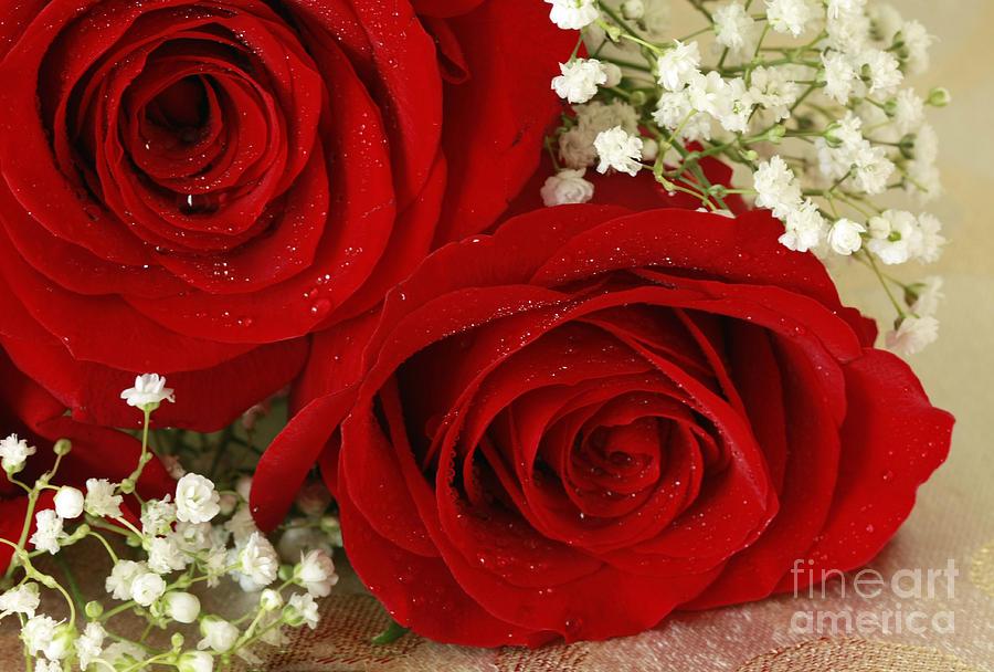 Royal Velvet Roses Photograph - Royal Velvet Roses by Inspired Nature Photography Fine Art Photography