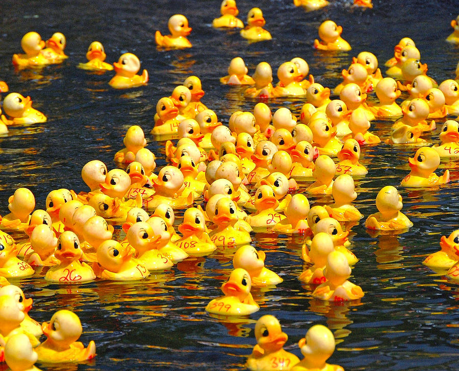 Rubber Duck Race Photograph