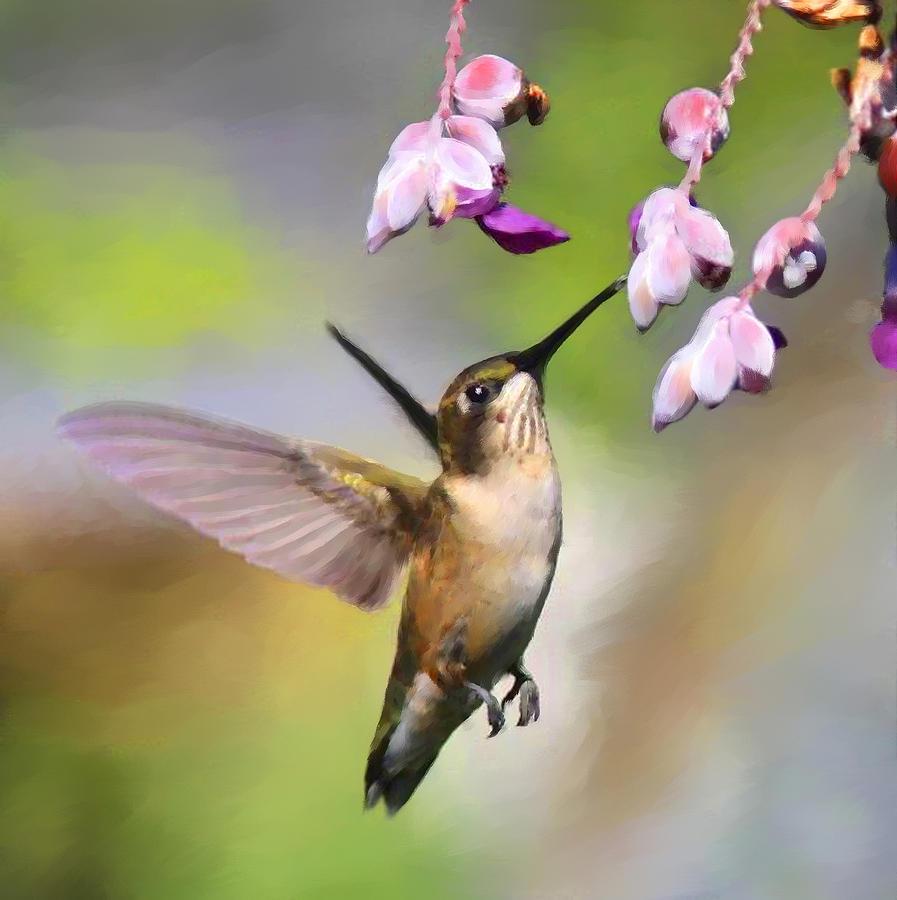 Ruby-throated Hummingbird - Digital Art Photograph
