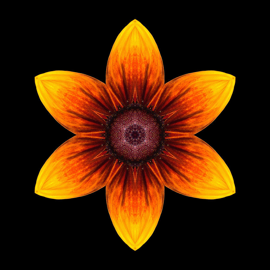 Flower Photograph - Rudbeckia I Flower Mandala by David J Bookbinder