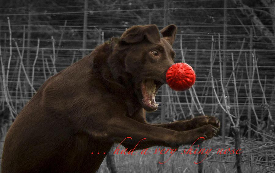 Animals Photograph - Rudolph by Jean Noren