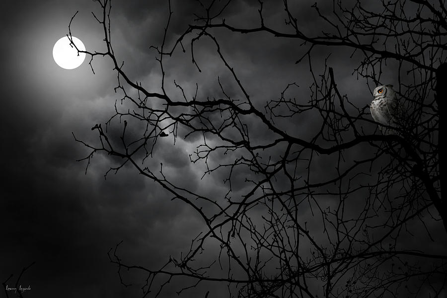 Ruler Of The Night Photograph