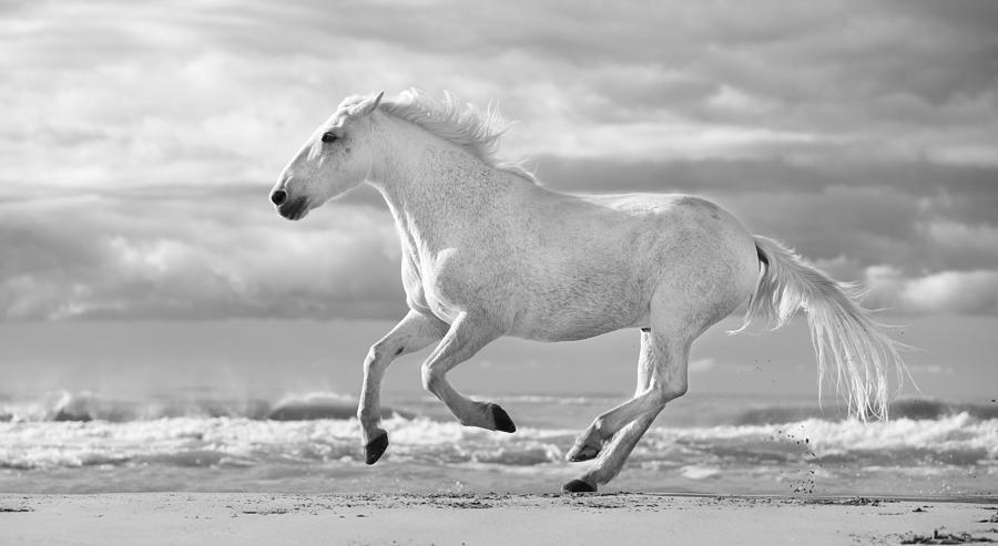 White Horses Running On The Beach