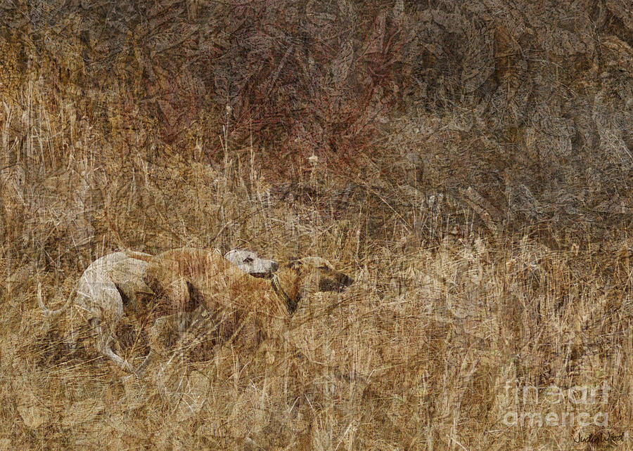 Dogs Digital Art - Run With Me by Judy Wood