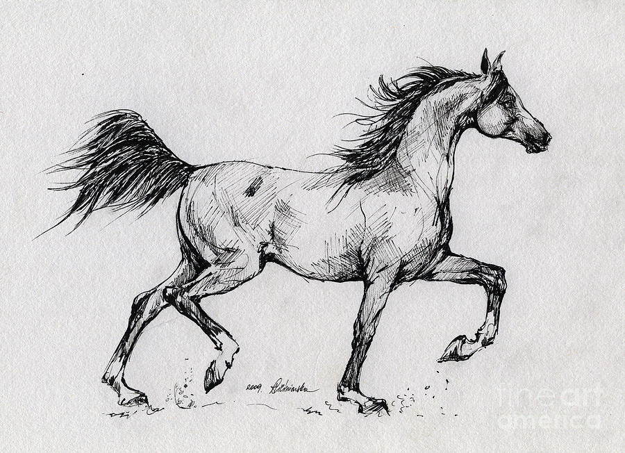Running arabian horse drawing - photo#2