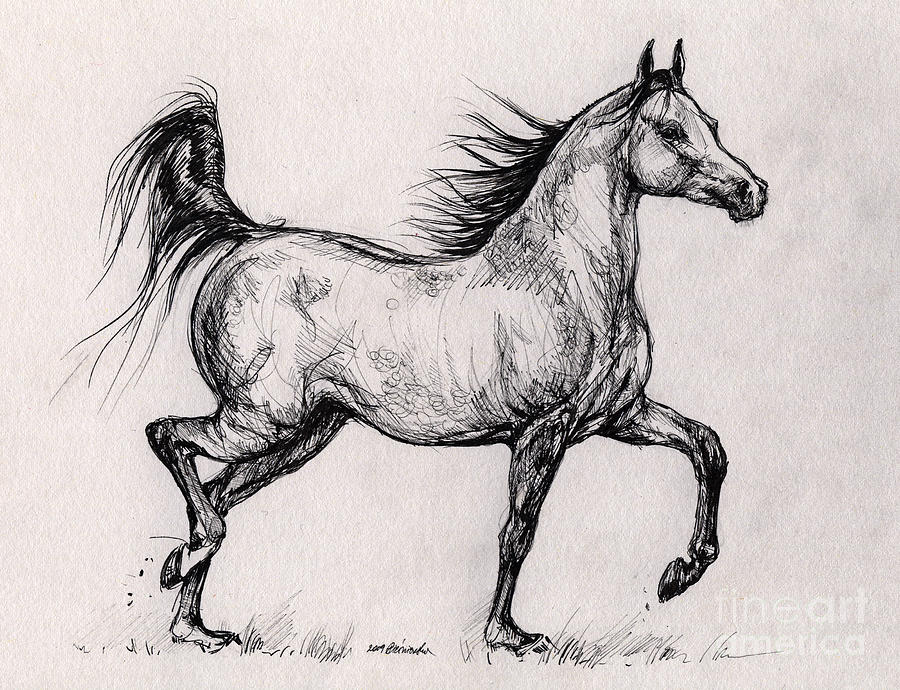 Running arabian horse drawing - photo#3