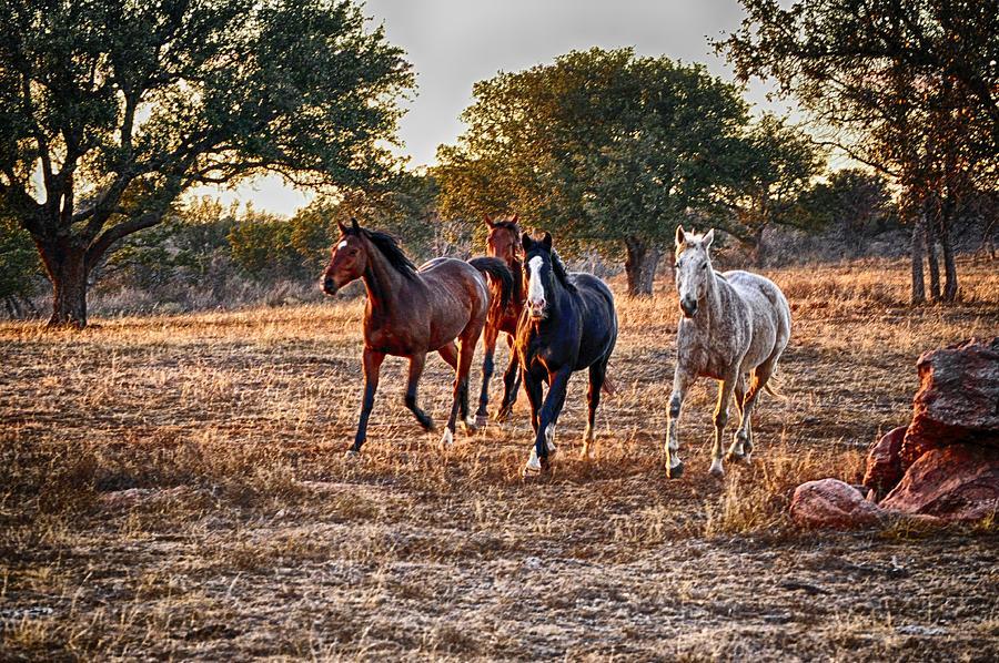 Running Horses Pyrography