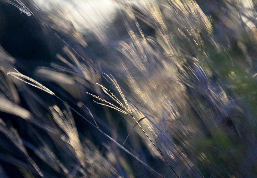 Weeds Photograph - Rush Hour by Debbie Howden