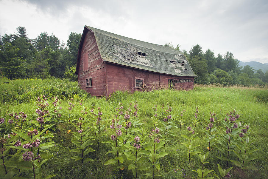 Rustic Barns - Farms - Old Barn In Flowery Field Photograph