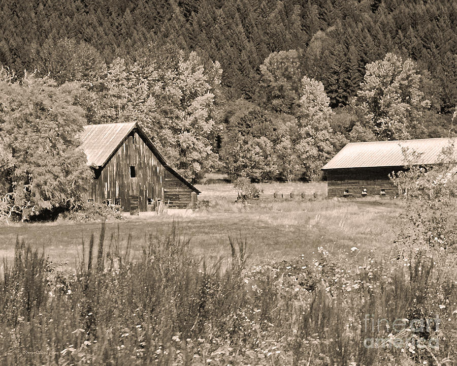 Rustic Beauty In Sepia Photograph